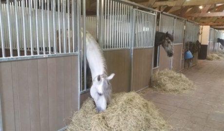 Paardenbox-op-maat